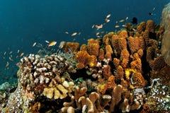 在礁石的海绵 免版税图库摄影