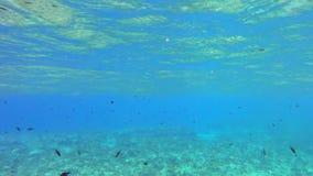 在礁石的雀鲷 股票录像