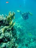 在礁石附近的珊瑚潜水员 免版税库存图片