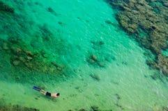 在礁石snorkeler游泳的珊瑚 库存图片