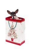 在礼品袋子的小狗。 圣诞节礼品 免版税图库摄影
