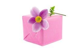 在礼物的银莲花属花 库存图片
