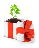 在礼物盒的树 库存图片