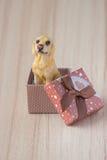 在礼物盒的狗 免版税图库摄影
