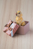 在礼物盒的狗 免版税库存照片