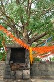 在神圣的圣洁树附近的老被破坏的寺庙与在分支b的旗子 库存照片