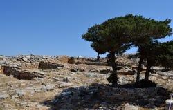 在神圣的地面的一棵偏僻的树 库存图片