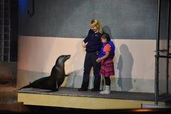 在神秘的水族馆的海狮展示在康涅狄格 库存照片