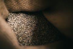 在神色里面去在黄麻袋的未经焙烧的豆 免版税库存照片