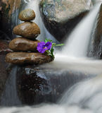 在禅宗岩层的紫色花与在它附近的流动的水 图库摄影