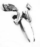 在福克兰群岛的鲸鱼骨头 库存照片