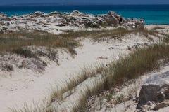 在福门特拉岛海滩的石头 库存照片