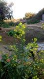 在秀丽😊之外的美丽的花 免版税库存照片