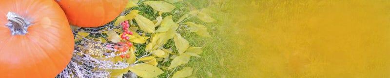 在秀丽明亮的秋季自然背景的橙色南瓜 秋天感恩天 免版税图库摄影