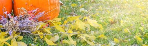 在秀丽明亮的秋季自然背景的橙色南瓜 秋天感恩天 库存图片