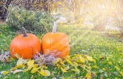 在秀丽明亮的秋季自然背景的橙色南瓜 秋天感恩天 免版税库存照片