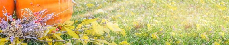 在秀丽明亮的秋季自然背景的橙色南瓜 秋天感恩天 免版税库存图片