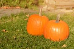 在秀丽明亮的秋季自然背景的橙色南瓜 免版税图库摄影