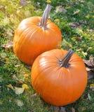 在秀丽明亮的秋季自然背景的橙色南瓜 图库摄影