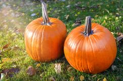 在秀丽明亮的秋季自然背景的橙色南瓜 库存照片