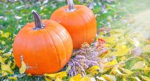 在秀丽明亮的秋季自然背景的橙色南瓜 免版税库存图片