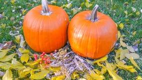 在秀丽明亮的秋季自然背景的橙色南瓜 库存图片