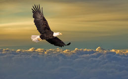 在秃头云彩老鹰飞行之上 免版税库存照片