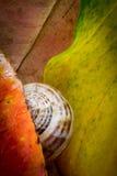 在秋叶下的蜗牛 免版税图库摄影