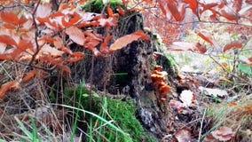 在秋叶和绿草的异常的断枝 免版税库存照片