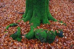 在秋叶地毯的大树 库存照片