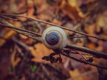 在秋叶特写镜头背景的蜗牛  免版税库存照片