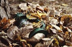 在秋叶的光 图库摄影