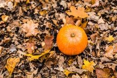 在秋叶的南瓜 库存照片