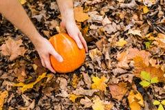 在秋叶的南瓜 库存图片