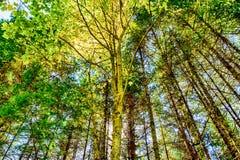 在秋叶的太阳 免版税库存图片