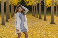 在秋叶的深色的模型 库存图片