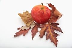 在秋叶的红色苹果 免版税图库摄影