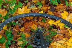在秋叶的自行车车轮,在秋叶、五颜六色的叶子和用途的自行车车轮从自行车 图库摄影