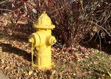 在秋叶的黄色消防龙头 库存照片