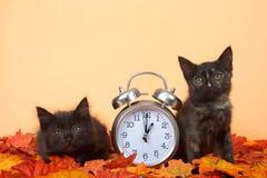 在秋叶的黑小猫与时钟,夏令时概念 免版税图库摄影