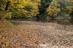 在秋叶盖的湖 库存照片