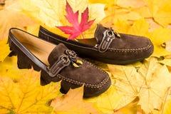 在秋叶背景的鞋子 免版税库存图片