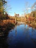 在秋天下午的沼泽地 图库摄影