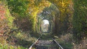 在秋天下的被放弃的铁路上色了树挖洞,跌倒金黄的叶子 股票录像