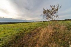 在秋天倾斜域的一个结构树 库存照片