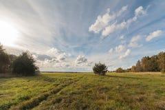 在秋天倾斜域的一个结构树 库存图片