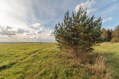在秋天倾斜域的一个结构树 免版税库存照片