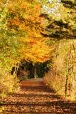 在秋天公园中间的道路 免版税库存照片