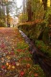 在秋天公园供以人员走在五颜六色的人行道 免版税库存照片