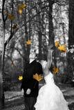 在秋天公园的婚礼夫妇 已婚夫妇在婚礼之日 免版税库存照片